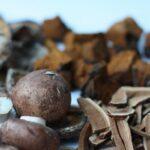 Mirisne gljive za razne namjene